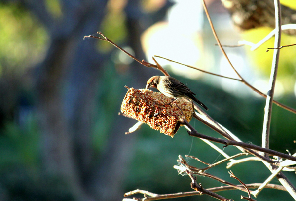 toilet paper roll bird feeder. this post has tons of reuses for TP rolls!