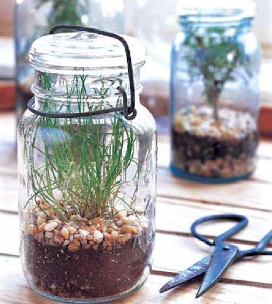 Put it in a Jar terrarium